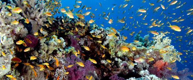 الشعب المرجانية في الوجه وريخه